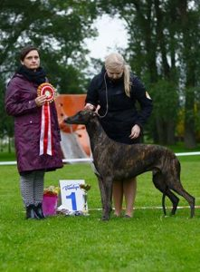 14Best in show at Latvian